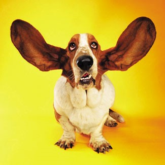 newsletter-photo-of-dog-listening